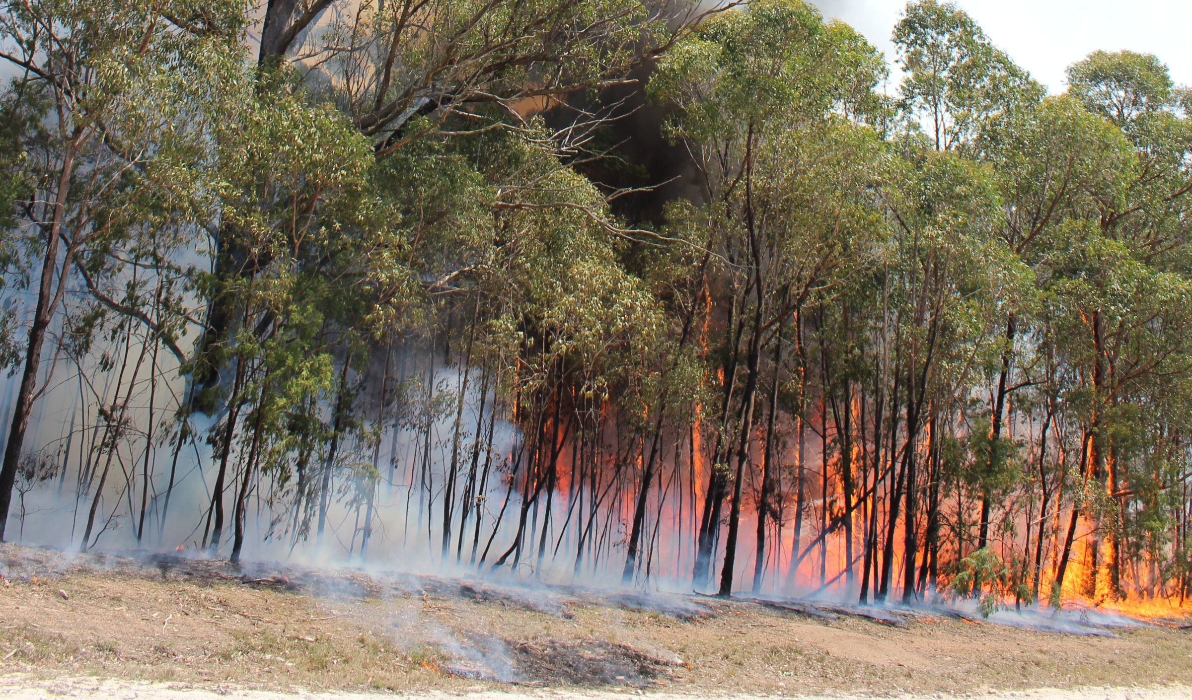 The Bushfire Foundation Inc